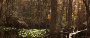 Highland Hammocks State Park