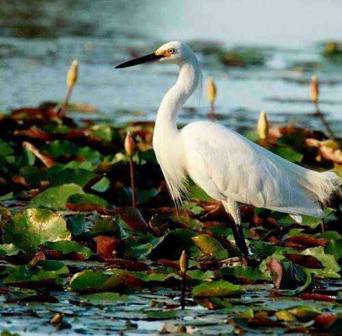 white bird image
