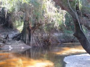 paynes-creek-2