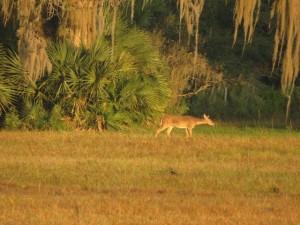 walton-deer