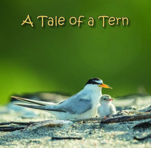 A Tale of A Tern by Mary Lundeberg